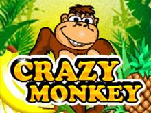 Игровые автоматы Crazy Monkey